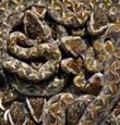 blog-snakes